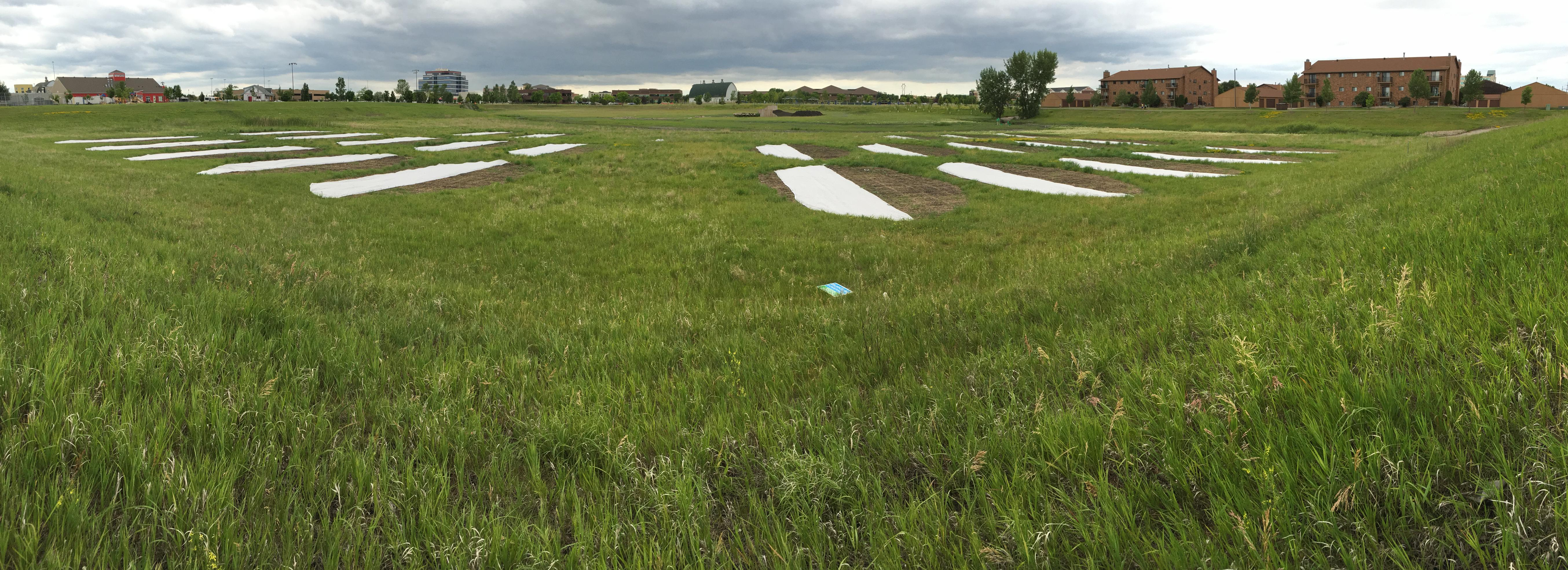 Vegetation plots test establishment, resistance to encroachment, hardiness, and durability for stormwater basins