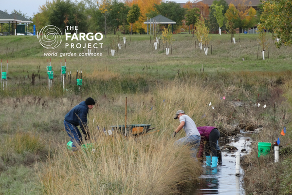 NDSU student volunteers place rocks to induce meander in the old channel bed