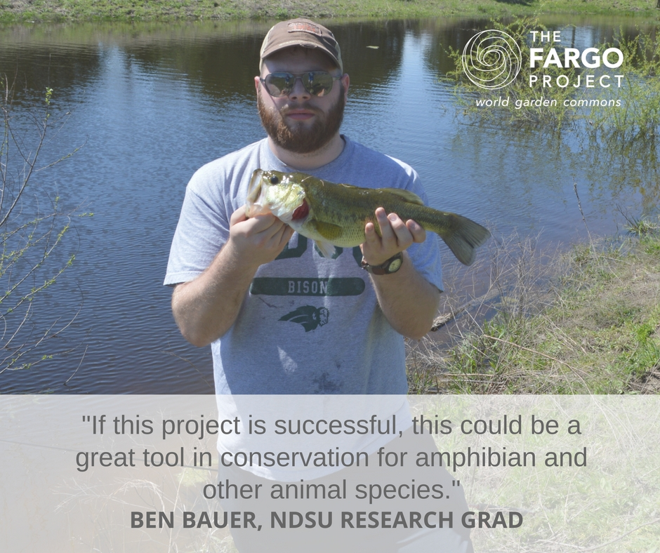 Ben Bauer, a NDSU Natural Resource Management graduate student, will reintroduce frogs into a restored urban wetland habitat and monitor the success of the reintroduced frogs