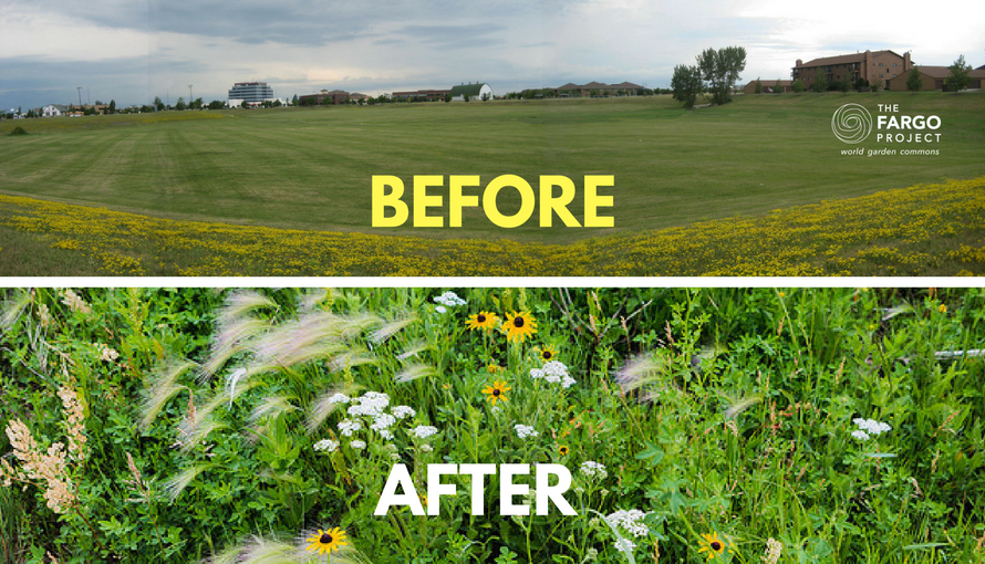 "A mowed lawn was sole ""before"" feature of the water basin at Rabanus Park, the ""after"" image shows World Garden Commons full of plant diversity that can support pollinators, birds and other creatures."